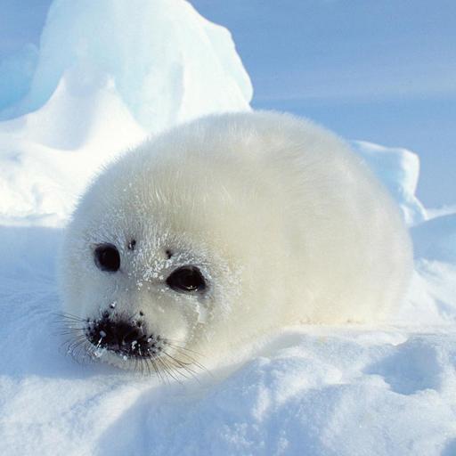 冰冻吧海豹君