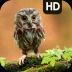 owlsimulator