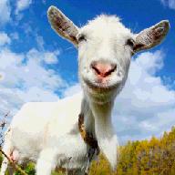 疯狂的山羊