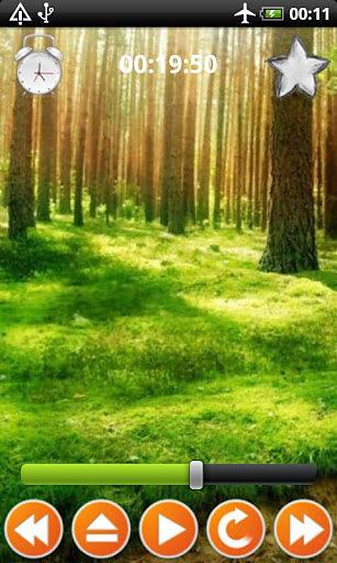 森林的声音