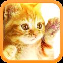kittyviewer
