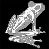 3D青蛙骨架