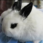一刀Ⅰ个小白兔